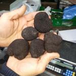 truffes3